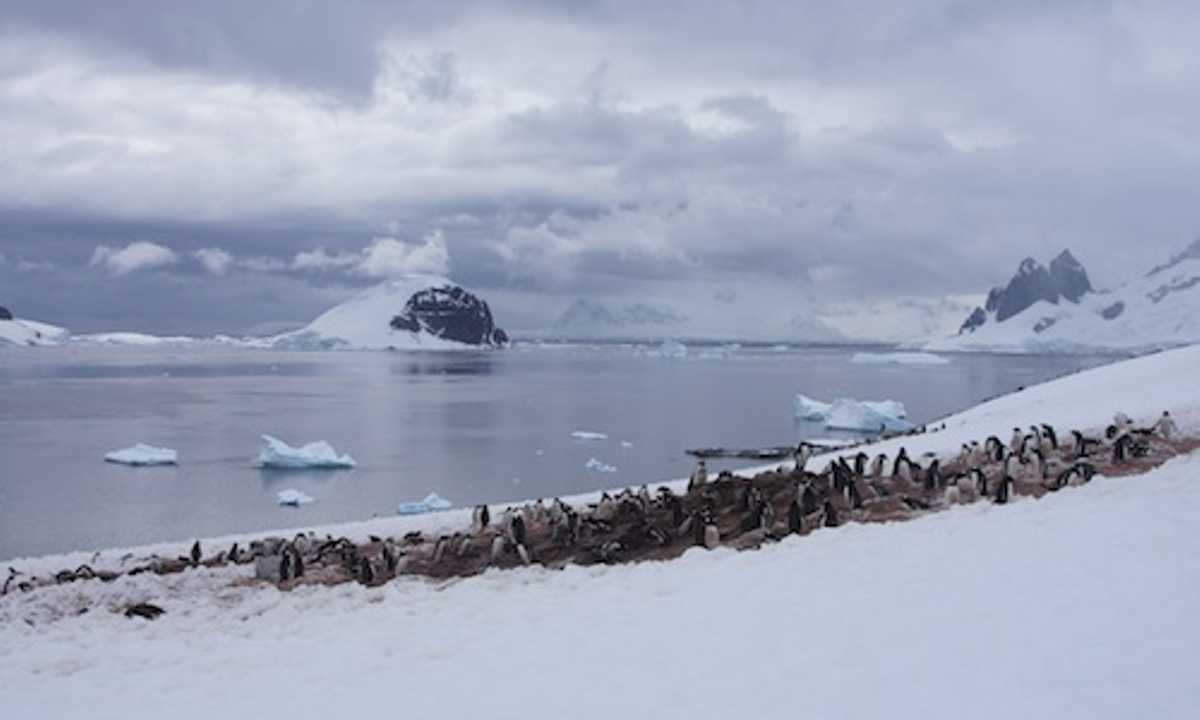 Danco Island