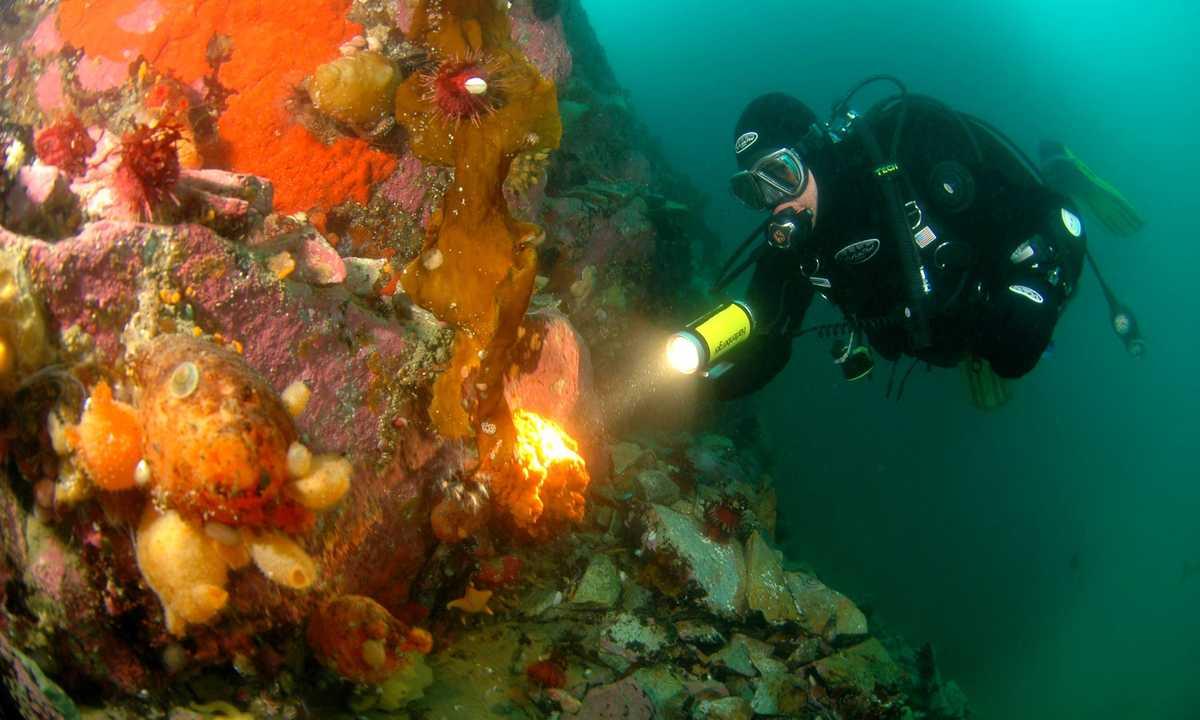 OCE_3_Carlos-Villoch_RTD_Diving-in-Antarctica-e