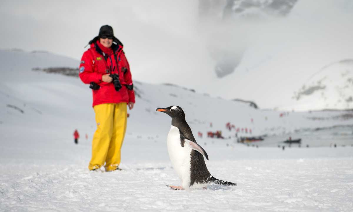 POS_3_Anthony-Smith_RTD_gentoo penguin antarctic