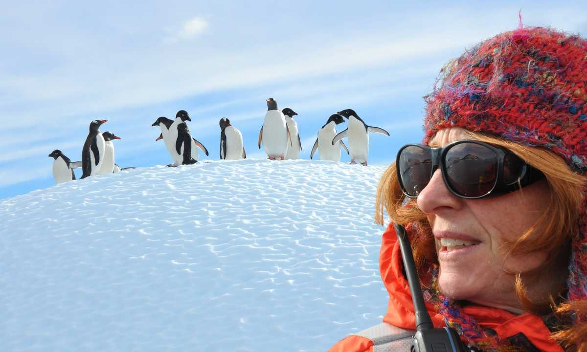 POS_3_POS_RTD_Antarctica-adelie-penguins
