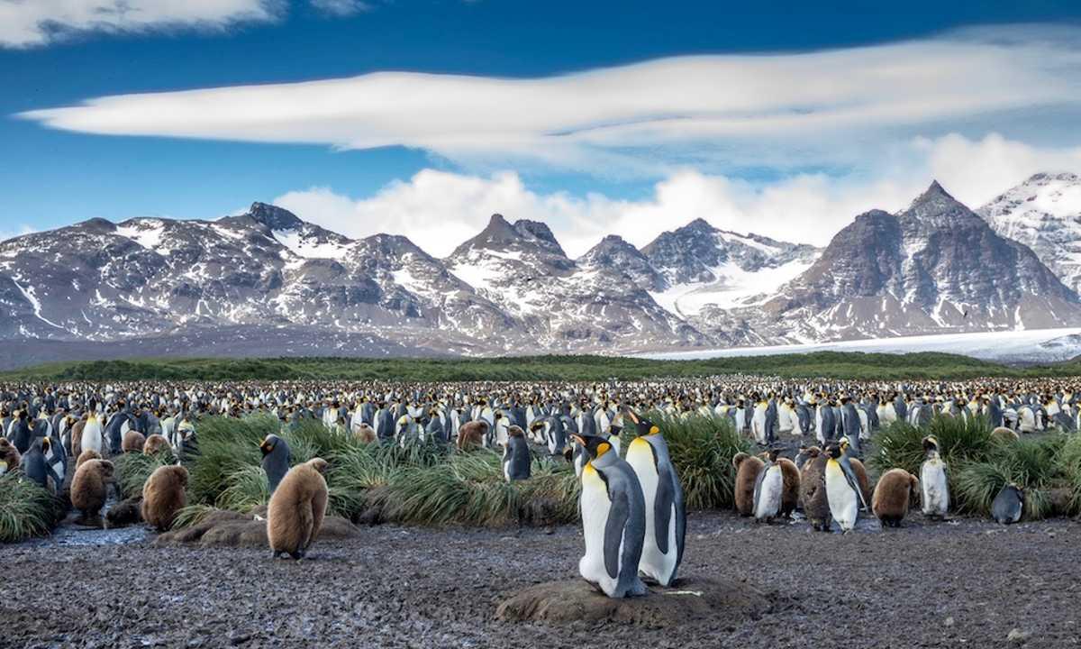 QUA_4_QUA_RTD_PenguinsMountains