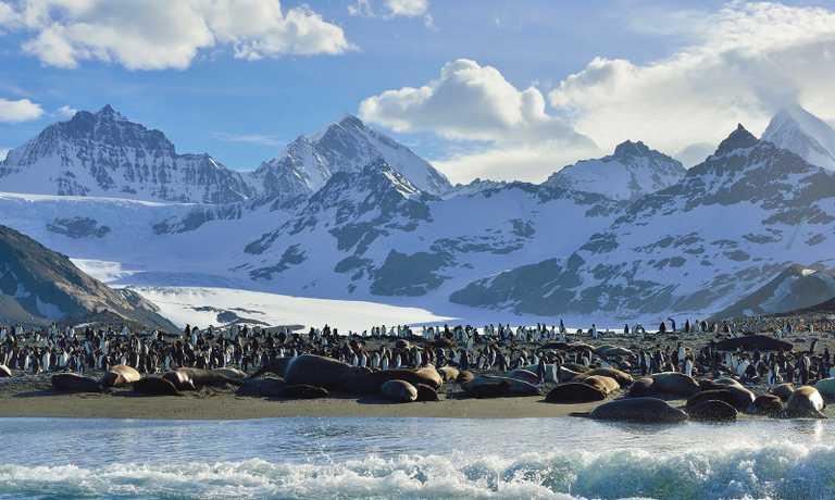 Spring Quest to Antarctica, Falklands and South Georgia