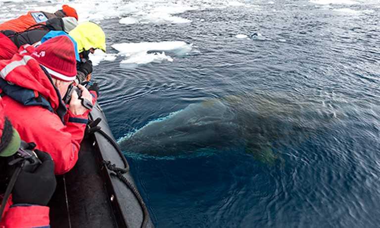 Antarctic Circle In-Depth