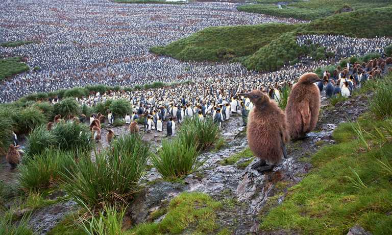 Voyage South Georgia, Falklands & Antarctica