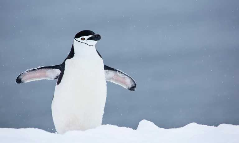 Antarctic Christmas Adventure