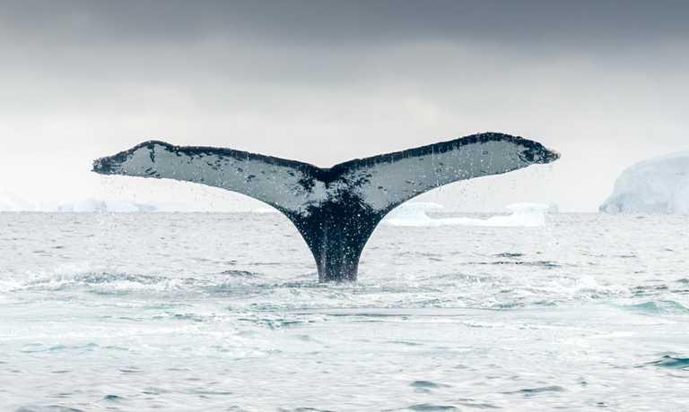 Falklands, South Georgia & Antarctica Luxury Explorer