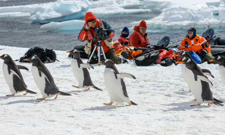 South Georgia, Antarctica and Falklands Luxury Explorer
