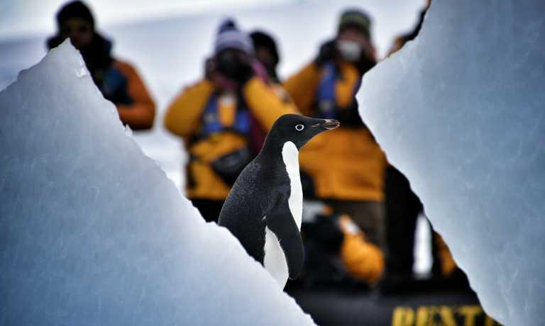 Explore Antarctica in Comfort